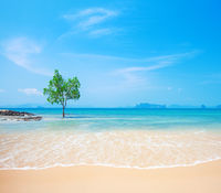 Lonely Mangrove tree in Krabi Thailand
