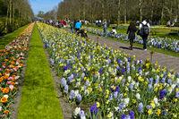Main promenade through Keukenhof Flower Gardens, Lisse, Netherlands
