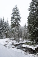 Harz Mountains - Winter forest at the brook Grumbach, Germany