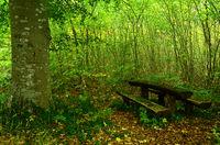 autumn, bench, autumn atmosphere,