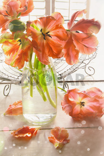 Closeup of colorful tulips near window