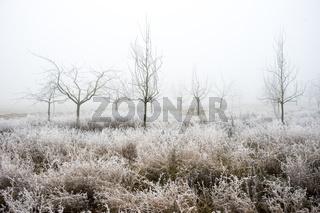 Streuobstwiese im Winternebel