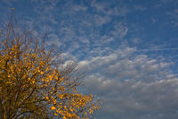 Herbstlaub vor bewoelktem Himmel