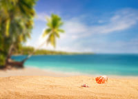 Tropical beach with shells