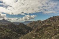 Aufforstung von Wald mit Kiefern in Gran Canaria