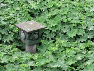 Gartensteckdosen zwischen Grünpflanzen
