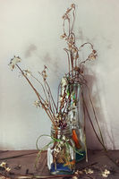 Still life with dry flowers in a glass vase closeup