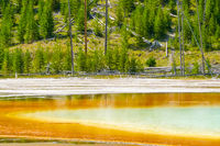Grand Prismatic Spring and the forest of Yellowstone Park