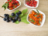 Edible wild fruits in autumn with sloe fruits, barberries, sea buckthorn fruits and rose hips