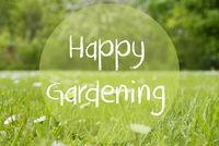 Gras Meadow, Daisy Flowers, Text Happy Gardening