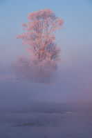 Tree under hoarfrost over river Koksha in clubs at morning time