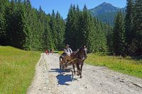Horse drawn carriage in the Chocholowskaclearing, West Tatra, Poland
