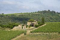 country house, vineyards, Radda in Chianti, Tuscany, Italy, Europe
