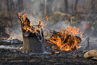 Waldbrand im Moremi National Park, Moremi Wildlife Reserve, Okavango Delta, Botswana, Afrika, forest fire, Africa