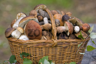basket, full of fresh autumn mushrooms.