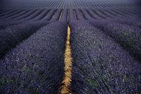 Valensole Haute Provence