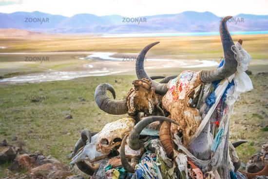 Pile of animal skulls