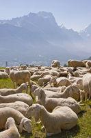 Schafherde in den Dolomiten