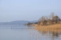 Morning mood at Lake Bolsena