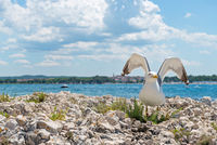 Seagull on the rocky beach in Istria