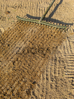 Raking sand with a bunker trap rake.