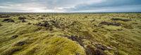 Icelandic landscape of moss field