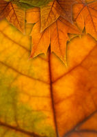 autumn background with leaves and copyspace
