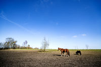 Rural landscape with two grazing horses