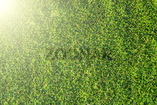 sunny grass. highly detailed texture