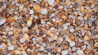 Beach covered with small colorful seashells