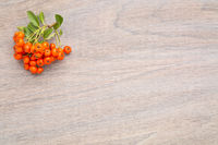 wooden background with firethorn berries