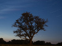 startrail with tree