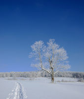 winter landscape; swabian alps; swabian highlands;