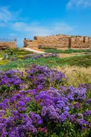 The ruins of walls and lavender flowers