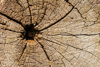 Tree rings on a weathered tree trunk