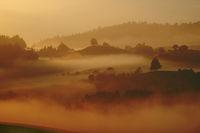 Golden morning Fog 1