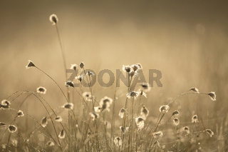 Morgenstimmung, Wiese, Sunrise, Meadow, Pfrunger Ried, Moor lanscape