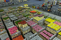 Boxes of flowers ready for shipment in a warehouse, Royal FloraHolland, Aaalsmeer, Netherlands