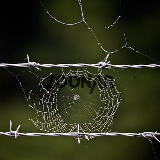 Stacheldraht_Spinnennetz_03.tif