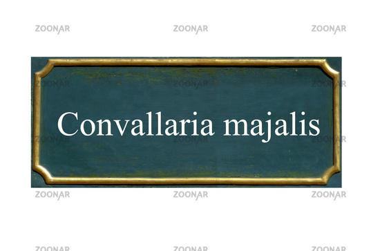 shield Convallaria majalis