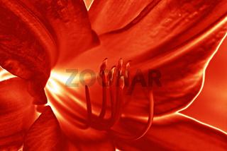 Rot - die Farbe der Liebe