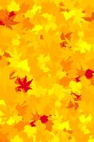 Vibrantly colored autumn leaves, vector wallpaper