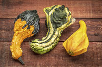 ornamental gourds abstract