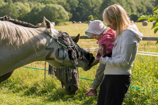 Mother and daughter are fed with grass horses on the farm