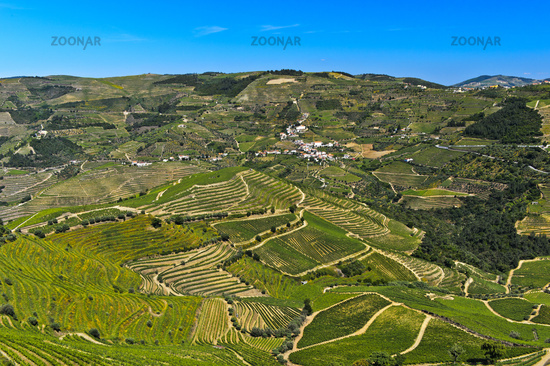 Terraced vineyards in the Rio Pinhao Valley, Alto Douro Wine Region, Portugal