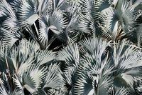 Palmleafs