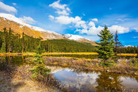 The boggy valley in the Rocky Mountains