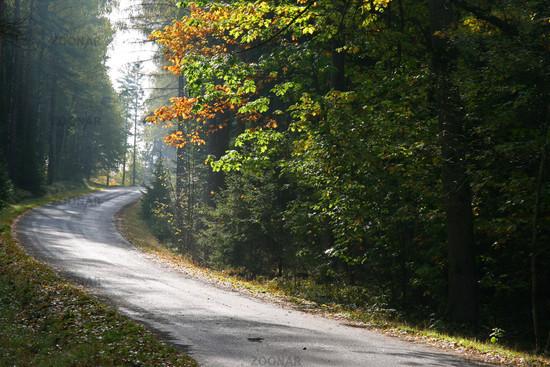 Waldstraße im Herbst