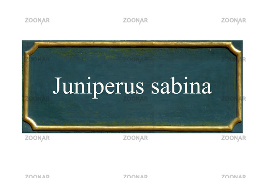 shield Juniperus sabina
