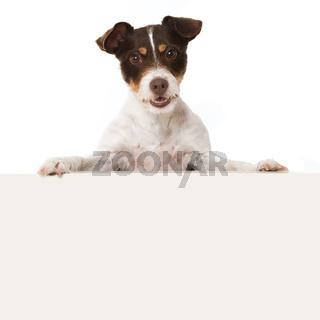Hund schaut über eine Mauer